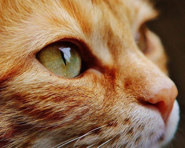 Tavolini trasparenti: anche i gatti li amano!